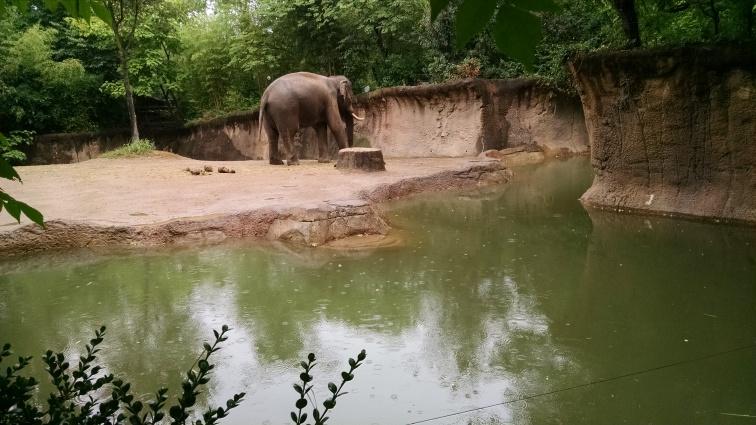 Asian Elephant 1.jpg
